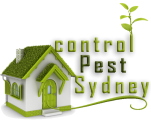 Best Pest Control Sydney